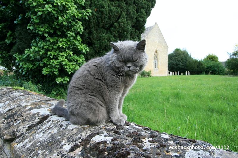 Church Cat